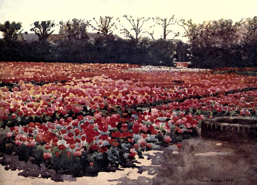 "Dutch Bulbs and Gardens, Painted and Described - ""They spring, they bud, they blossome fresh and faire, and decke the world with their rich pompous showes"" (1909)"