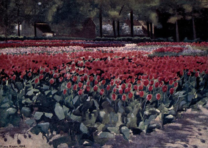 Dutch Bulbs and Gardens, Painted and Described - Tulips in their Prime (1909)