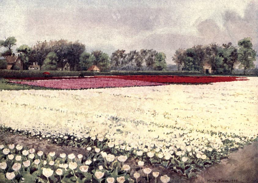 Dutch Bulbs and Gardens, Painted and Described - Here are tulips for you white, for the bridal or the burial (1909)