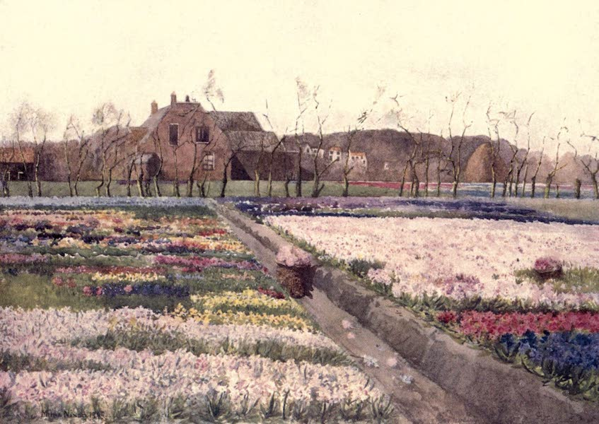"Dutch Bulbs and Gardens, Painted and Described - ""When Spring unlocks the flowers to paint the laughing soil"" (1909)"