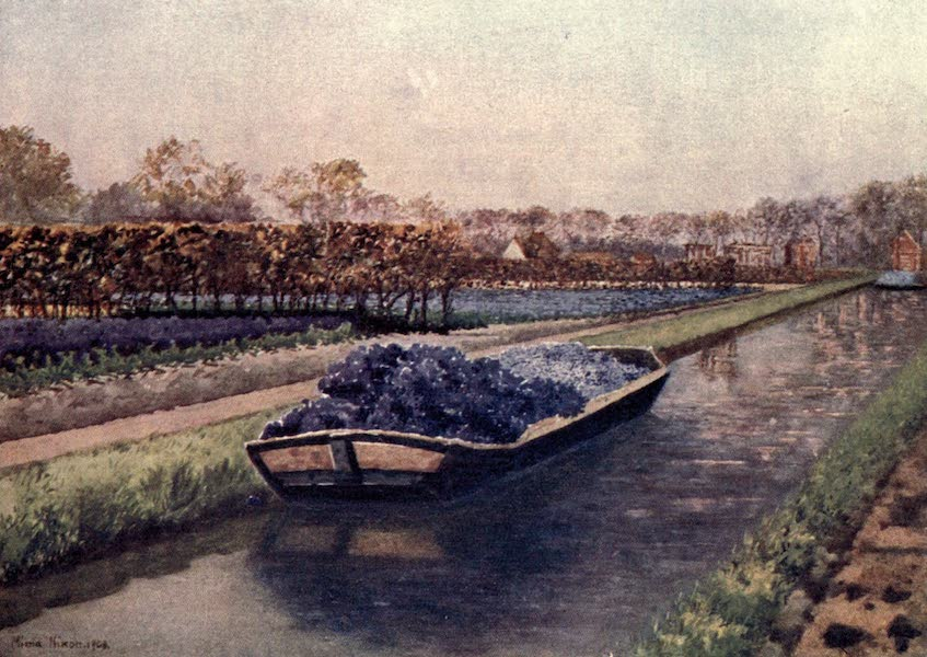 Dutch Bulbs and Gardens, Painted and Described - A Boatload of Fragrance (1909)