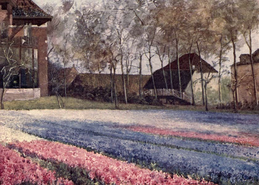 Dutch Bulbs and Gardens, Painted and Described - A Dutch Garden in Spring (1909)