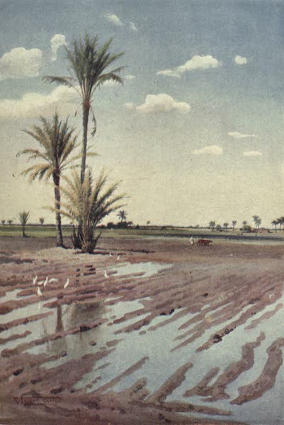 Egypt, Painted and Described - An Irrigated Field (1902)