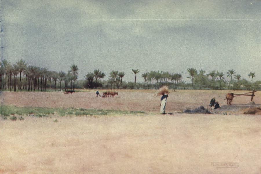 Egypt, Painted and Described - Esbet-el-Ekiad - Land of Goshen (1902)