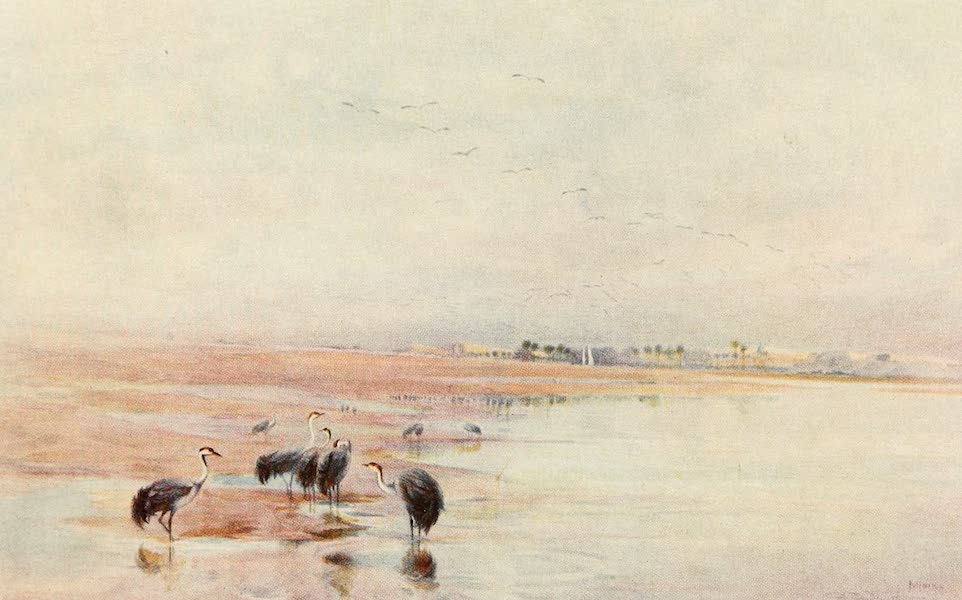 Egyptian Birds - A View on the Nile near Minieh (1909)