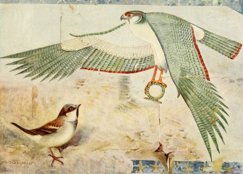 Egyptian Birds - Sparrow (1909)
