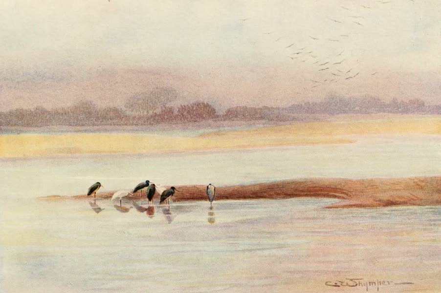 Egyptian Birds - Black Stork (1909)