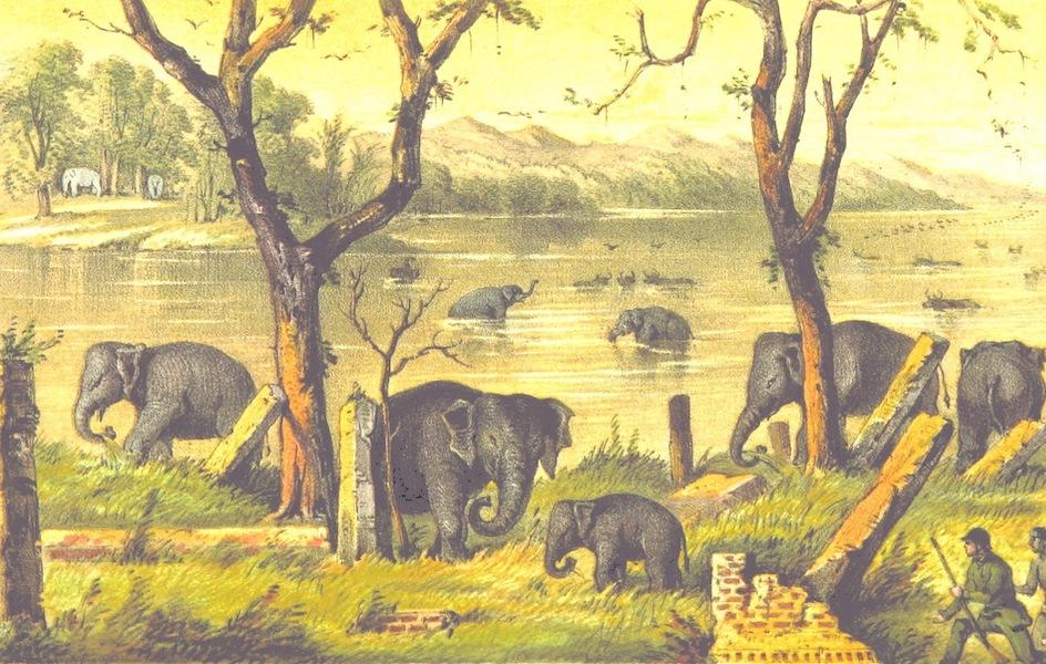 Eight Years' Wanderings in Ceylon - Tank Scene at Evening (1855)