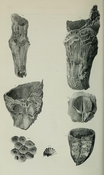 Exploration and Survey of the Valley of the Great Salt Lake of Utah - Paleontology: Corals - Ctathophyllidaae: Faviphyllum? rugosum, (n. sp.) F multilamella F. Stansburii - Lithostrontion - (sp. indet.), Plate I (1852)