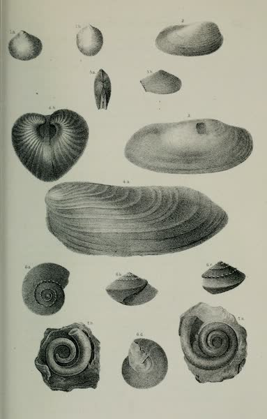 Exploration and Survey of the Valley of the Great Salt Lake of Utah - Paleontology: Brachiopoda: Terrebratula subtilita - Spirifer hemiplicata. S. octoplicata - S. triplicata, Plate II (1852)