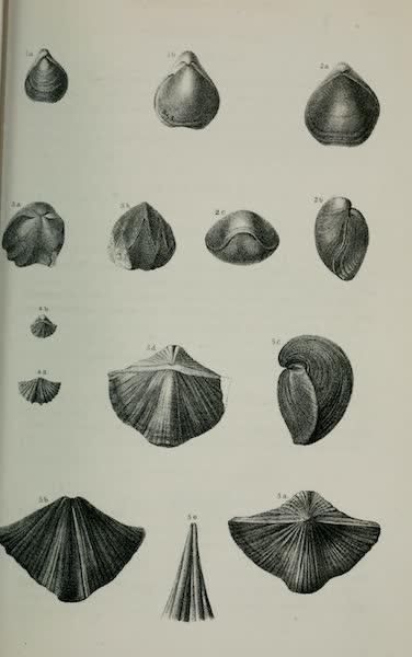 Exploration and Survey of the Valley of the Great Salt Lake of Utah - Paleontology: Acephala: Avicula? custa. Tellenomya protensa - Cypricardia occidentalis. Allorisma terminalis, (n. sp.) - Nucula arata, (n. sp.). GASTEROPODA: Pleurotomaria coronula, (n. sp.) Euomphalus subplanug, Plate IV (1852)