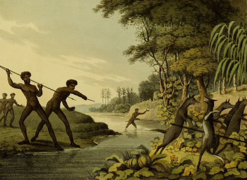 Field Sports of the Native Inhabitants of New South Wales - Hunting the Kangaroo (1813)