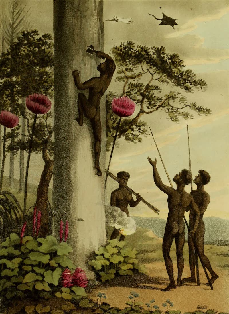 Field Sports of the Native Inhabitants of New South Wales - Climbing Trees (1813)
