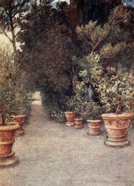 Florence & Some Tuscan Cities Painted and Described - The Ilex Walk, Mlla dell' Ombrellino San Domenico in April (1905)