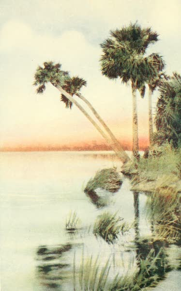 Florida, the Land of Enchantment - Palmettoes (1918)