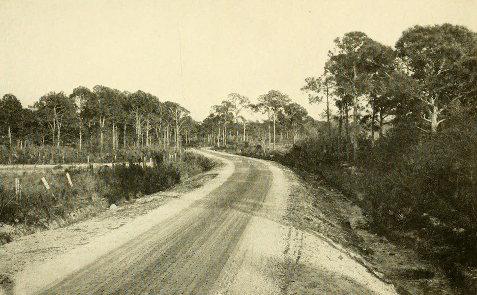 Florida, the Land of Enchantment - One of the Fine New Roads in Florida (1918)