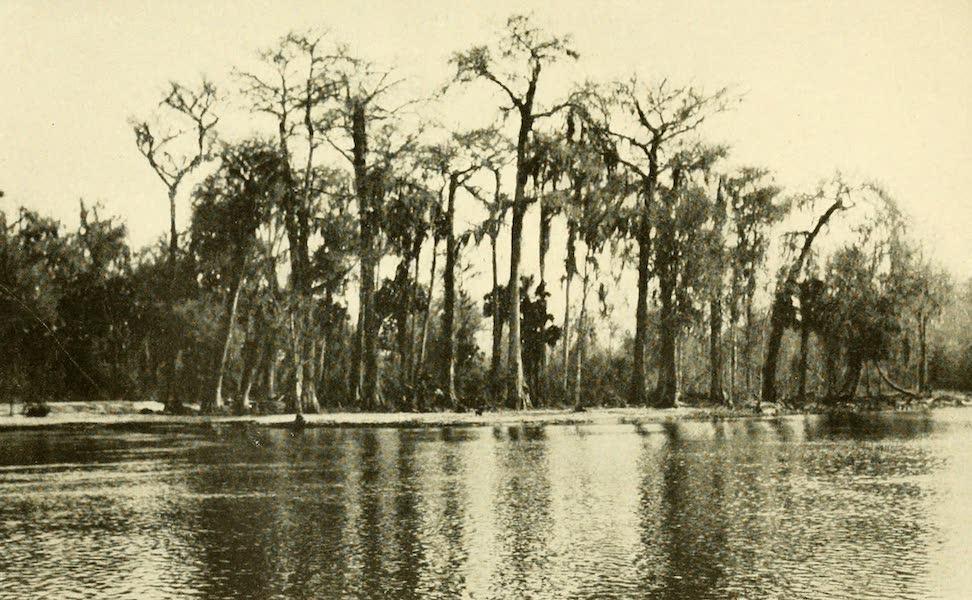Florida, the Land of Enchantment - A Cypress Swamp Along the Ocklawaha River (1918)