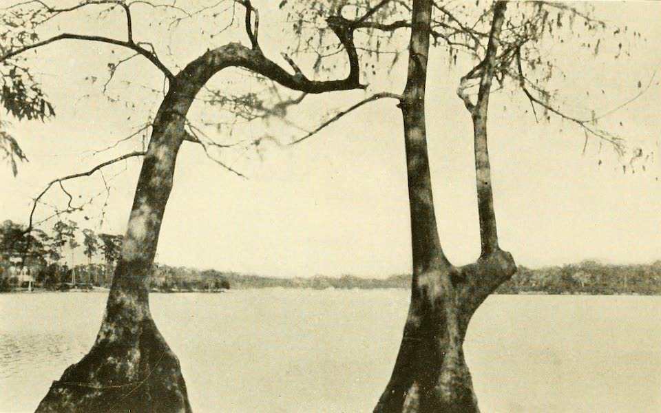 Florida, the Land of Enchantment - A View in Winter Park (1918)
