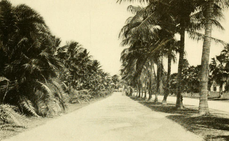 Florida, the Land of Enchantment - At Palm Beach (1918)