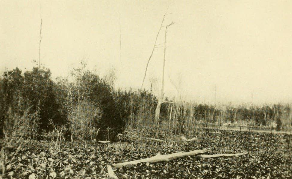 Florida, the Land of Enchantment - Water Hyacinths (1918)