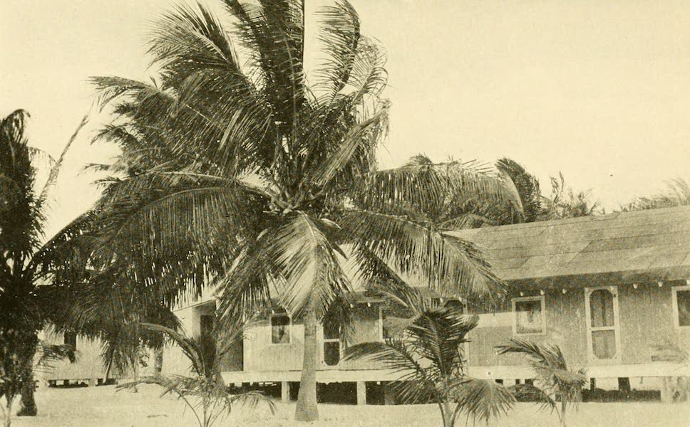 Florida, the Land of Enchantment - A Cocoanut Palm (1918)