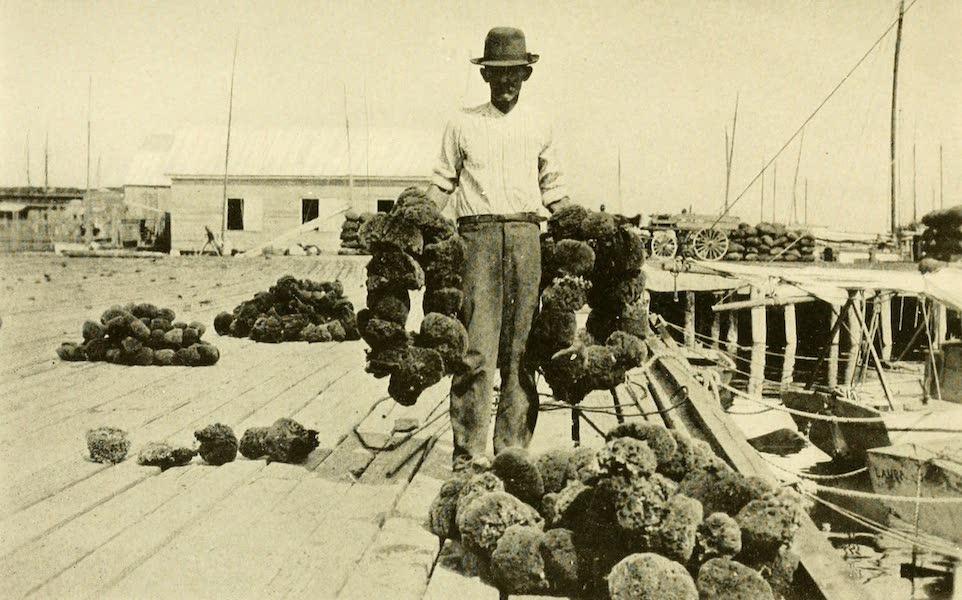 Florida, the Land of Enchantment - Hauling Sponges, at Key West (1918)