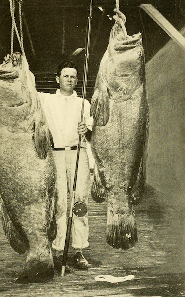Florida, the Land of Enchantment - Two Monsters of the Deep Caught in Florida Waters (1918)