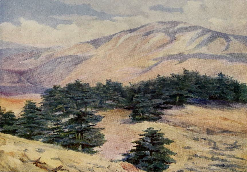 From Damascus to Palmyra - General View of the Cedars and Dehr el Kodib (1908)