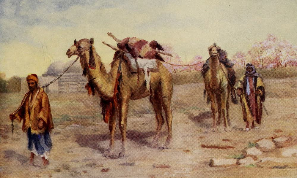 From Damascus to Palmyra - Camels and Drivers outside Damascus (1908)