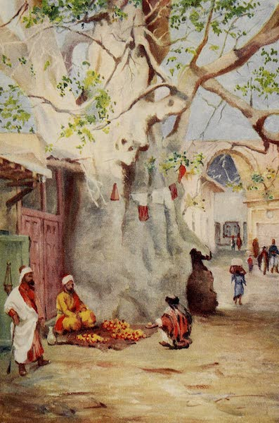From Damascus to Palmyra - Great Plantain in the Bazaar, Damascus (1908)