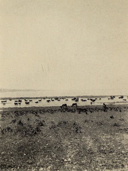 From Damascus to Palmyra - The Lake of Homs, Scene of Zenobia's Last Battle. From a Photograph (1908)