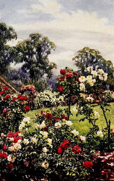 Gardens of England, Painted and Described - The Rose Garden, Newtown House, Newbury (1911)