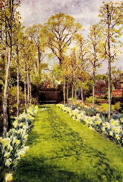 Gardens of England, Painted and Described - Daffodils, Waxwell Farm, Pinner (1911)