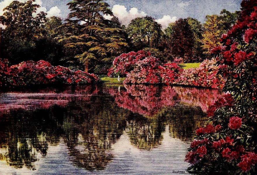 Gardens of England, Painted and Described - Rhododendrons, Upper Pleasure Ground, Moor Park (1911)