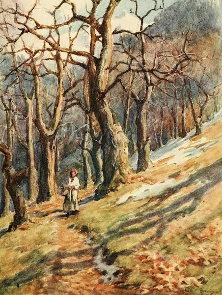 Geneva, Painted and Described - The Last Snow on the Wooded slopes (1908)
