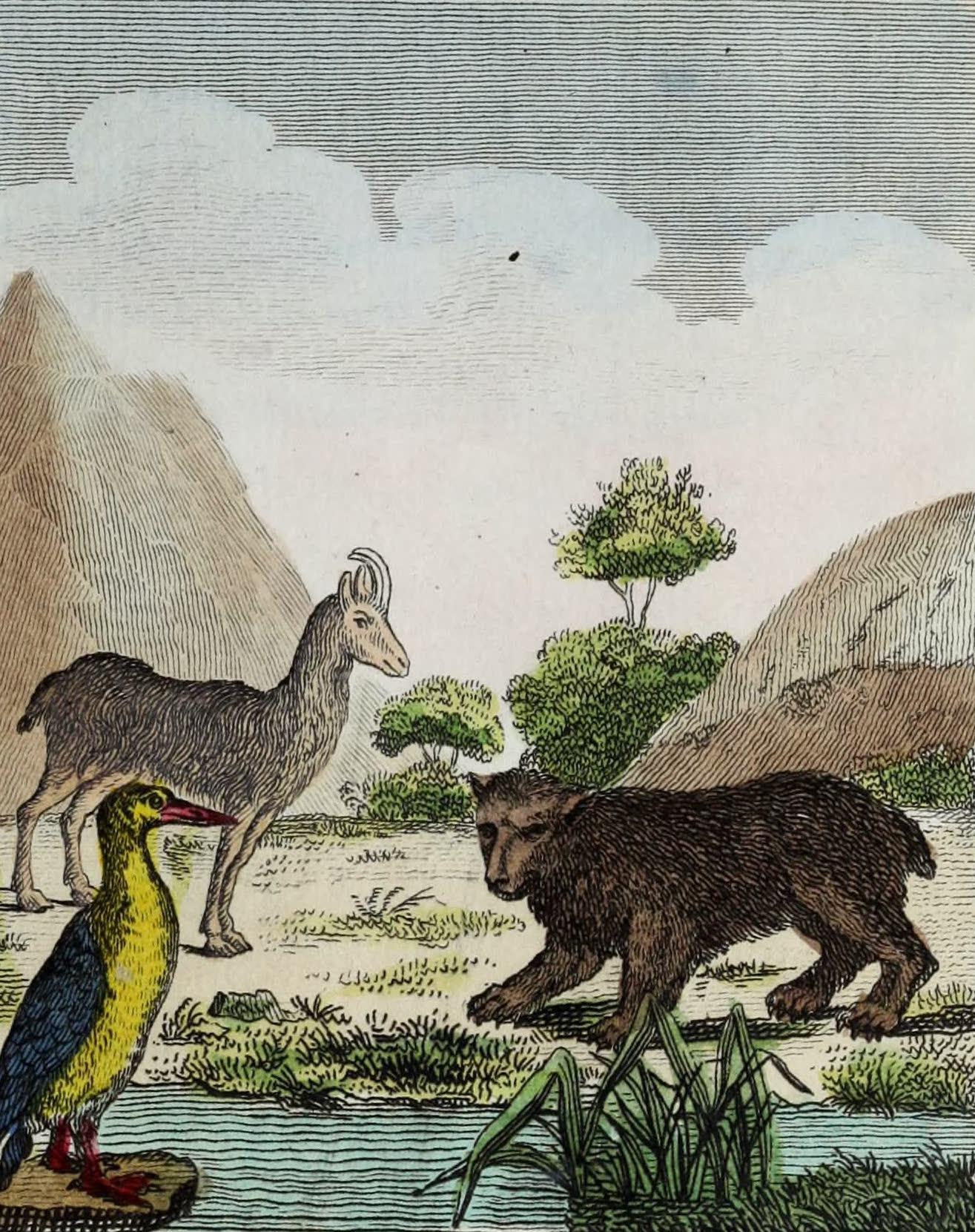 Geographie Vivante, ou, Tableaux Raisonnes - Le Plongeon, le Chamois, l'Ours (1821)