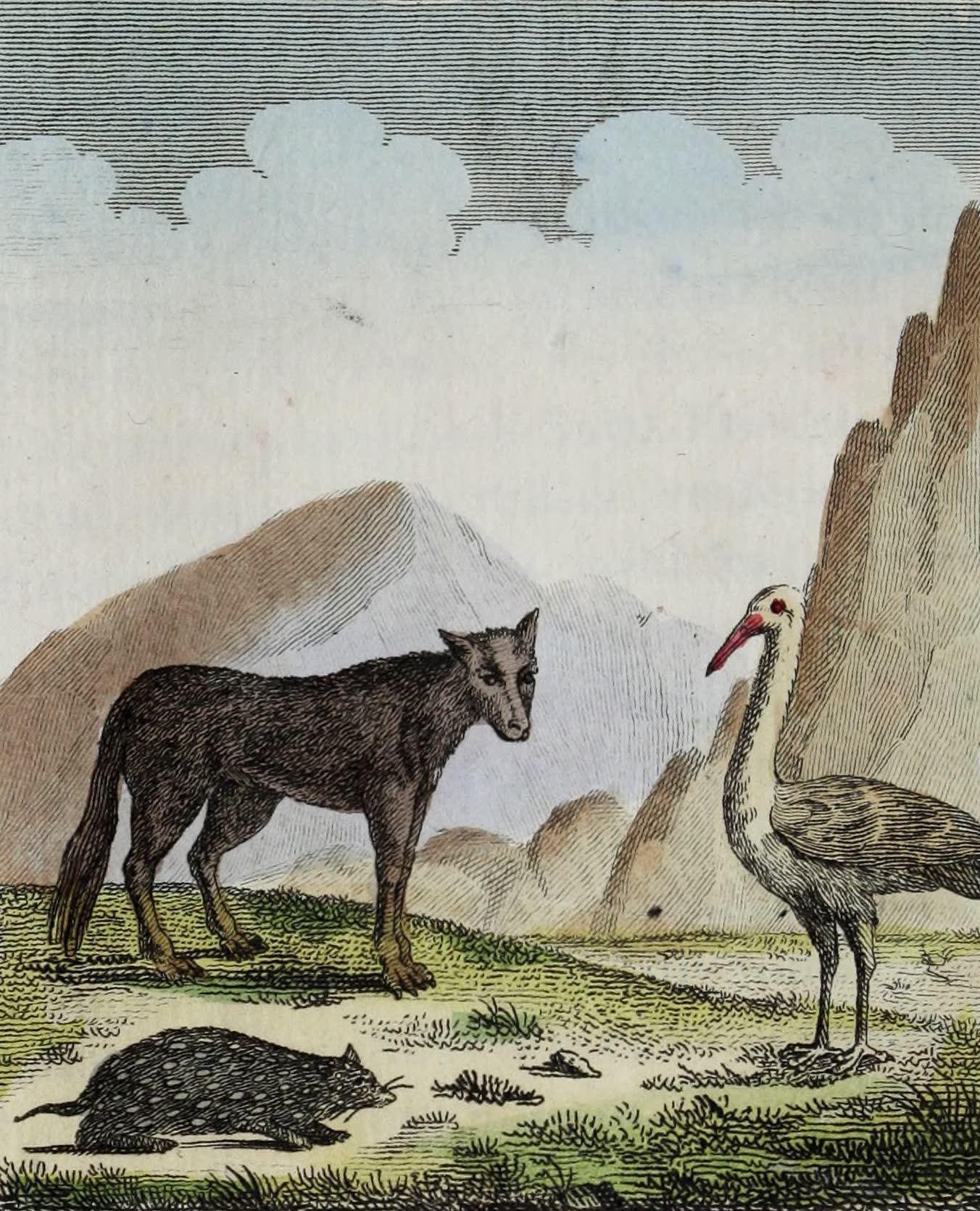 Geographie Vivante, ou, Tableaux Raisonnes - Le Loup, le Souslick, la Cigogne (1821)