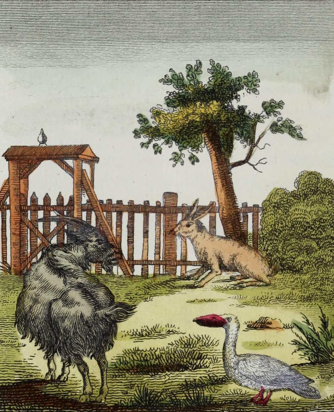Geographie Vivante, ou, Tableaux Raisonnes - Le Lievre, la Chevre d'Angora, le Pelican (1821)