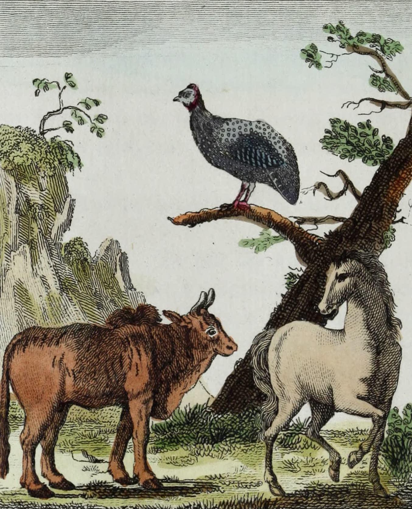 Geographie Vivante, ou, Tableaux Raisonnes - La Pintade, le Zebu, le Cheval (1821)
