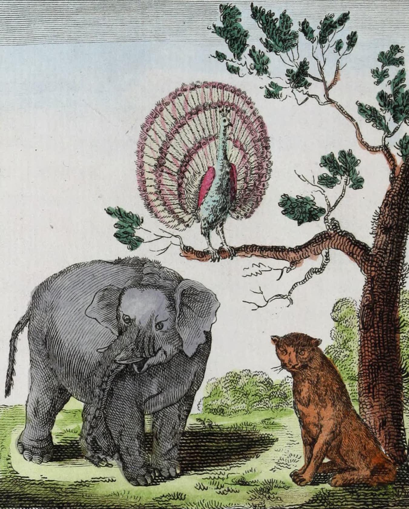 Geographie Vivante, ou, Tableaux Raisonnes - Le Paon, l'Elephant, le Tigre (1821)
