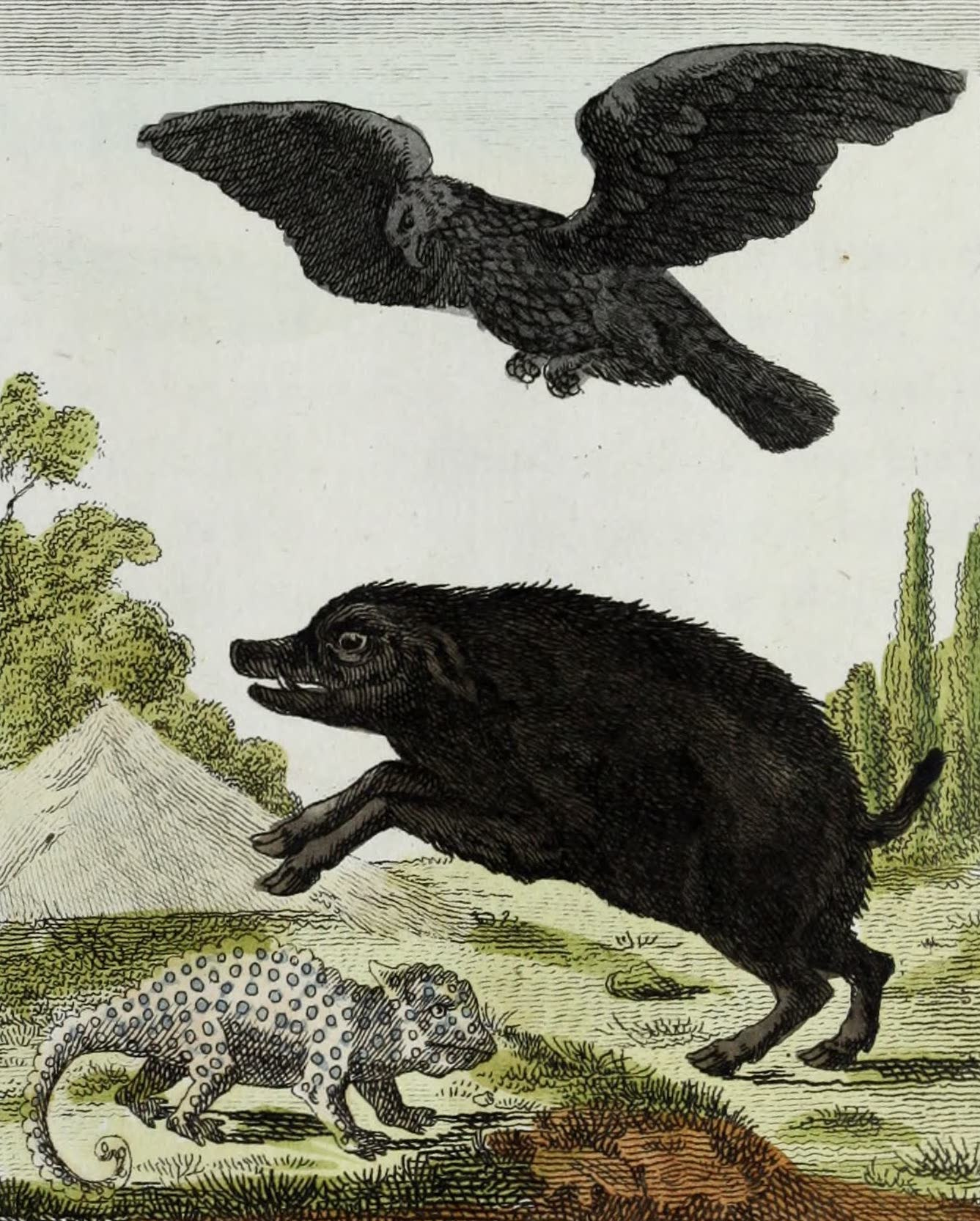 Geographie Vivante, ou, Tableaux Raisonnes - L'Aigle, le Sanglier sauvage, le Cameleon (1821)