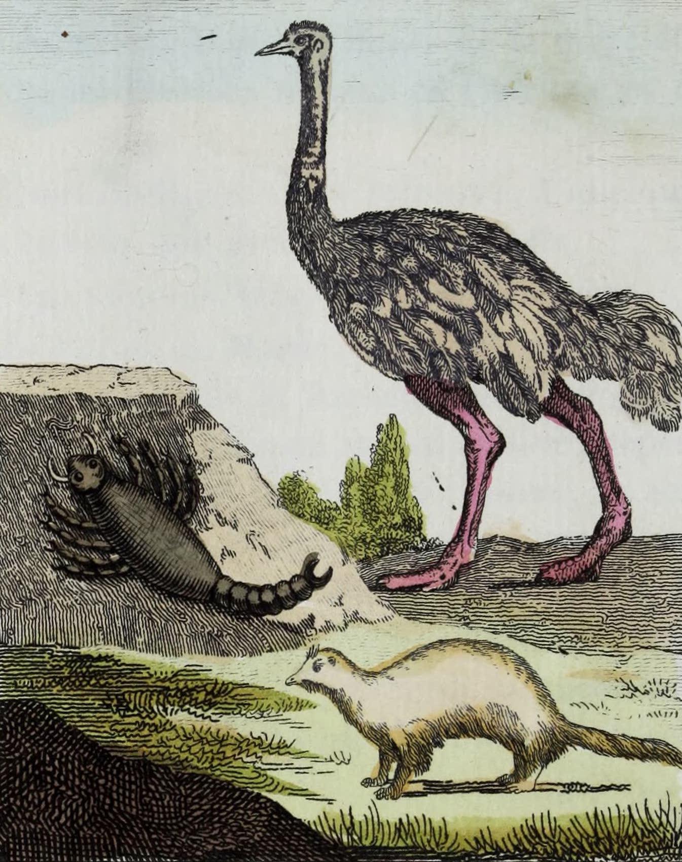 Geographie Vivante, ou, Tableaux Raisonnes - L'Autruche, le Scorpion, le Furet (1821)