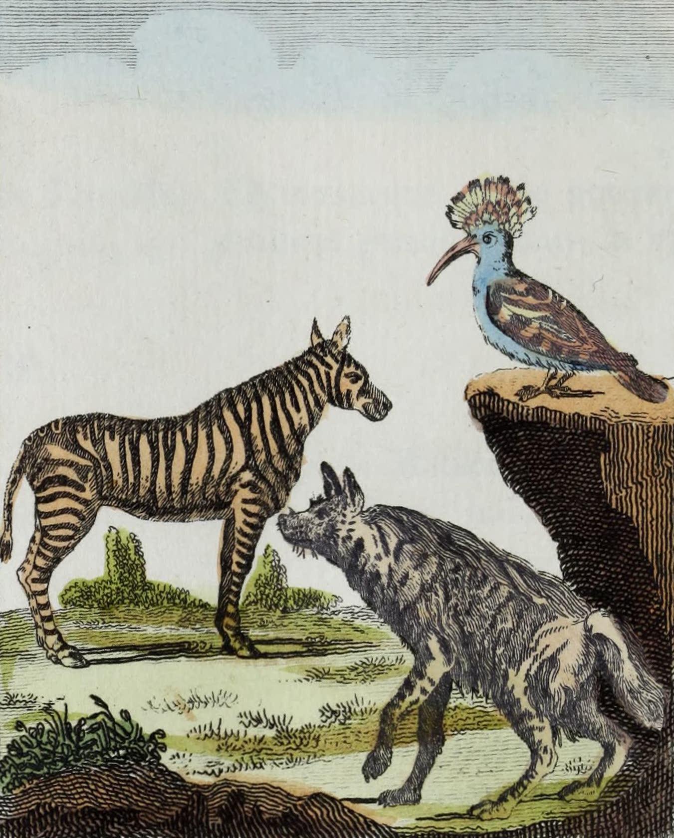 Geographie Vivante, ou, Tableaux Raisonnes - Le Zebre, la Huppe, l'Hyene (1821)