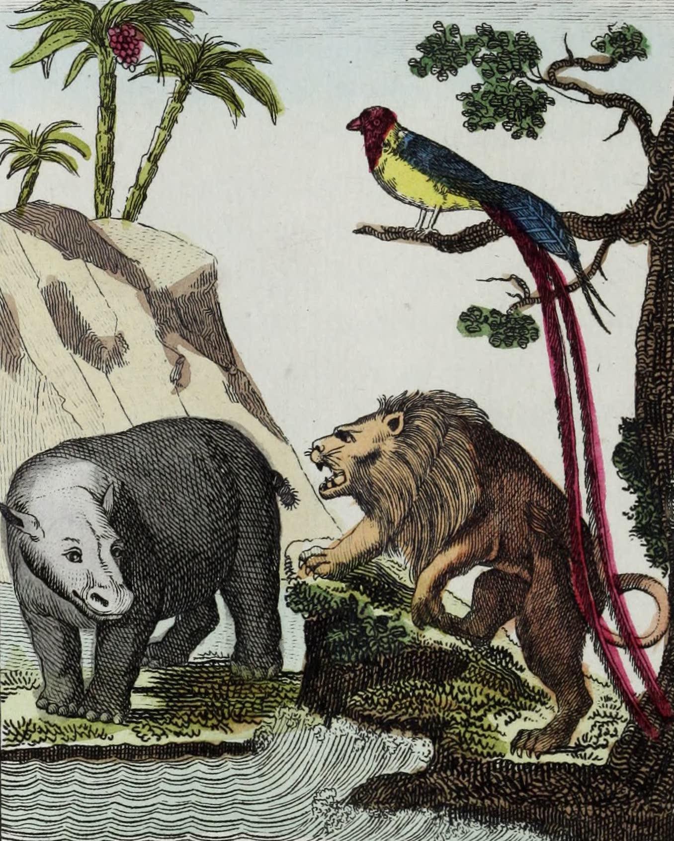 Geographie Vivante, ou, Tableaux Raisonnes - L'Hippopotame, le Lion, la Veuve (1821)