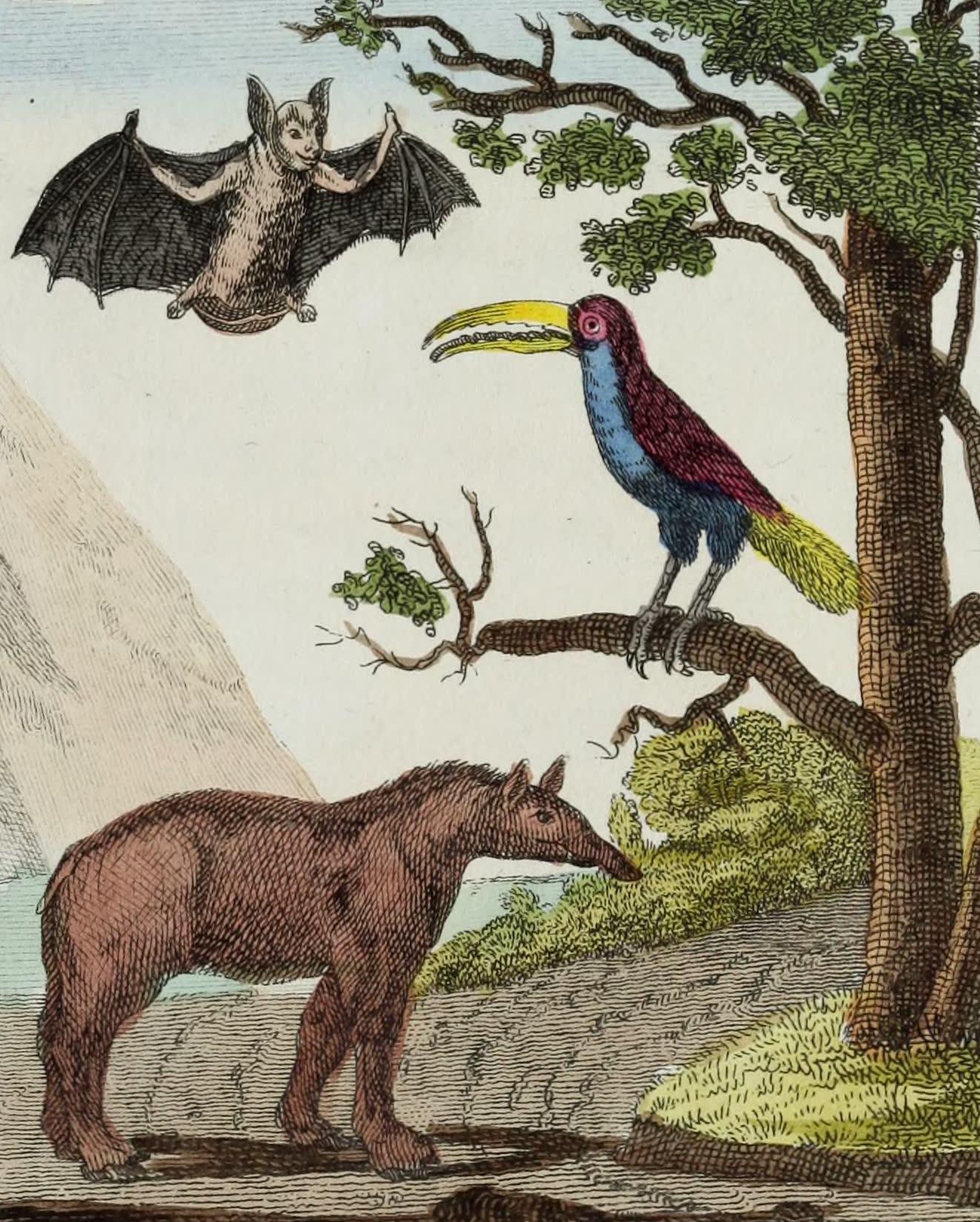 Geographie Vivante, ou, Tableaux Raisonnes - Le Vampire, le Toucan, le Tapir (1821)