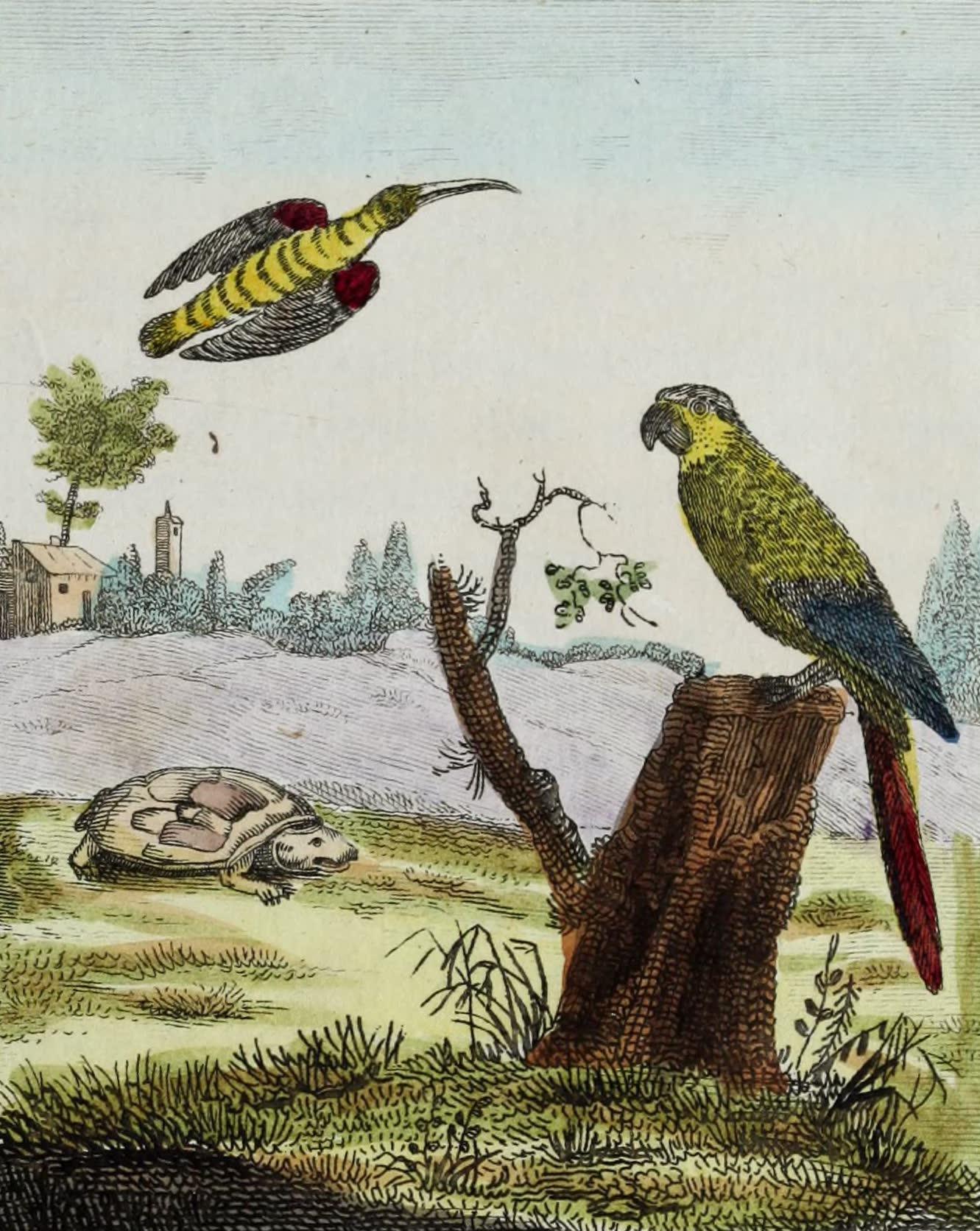 Geographie Vivante, ou, Tableaux Raisonnes - Le Colibri, la Tortue terrestre, l'Ara (1821)