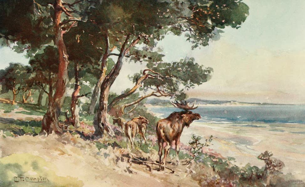 Germany, Painted and Described - East Prussian Forest on the Kurisches Haff (1912)