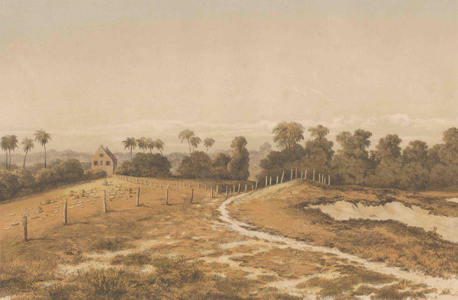 Gezigten uit Neerland's West-Indien - Joden Savannah : gezigt op sijnagoge en kerkhof van de zijde van het militair cordonpad gezien (1860)