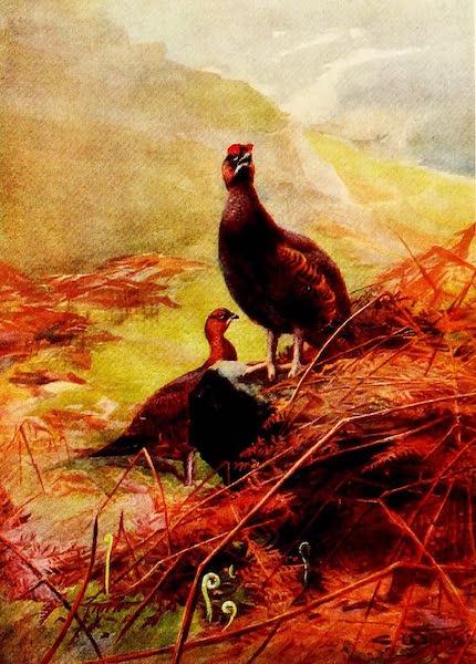 Grouse and Grouse Moors - Springtime on the Moors (1910)