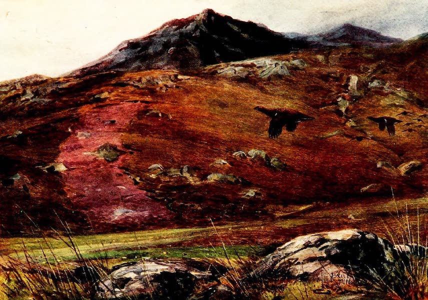 Grouse and Grouse Moors - Heather Burning in long Strips (1910)
